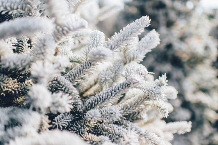 【重要なお知らせ】冬期営業のご注意 _営業時間変更・カメラマン不在